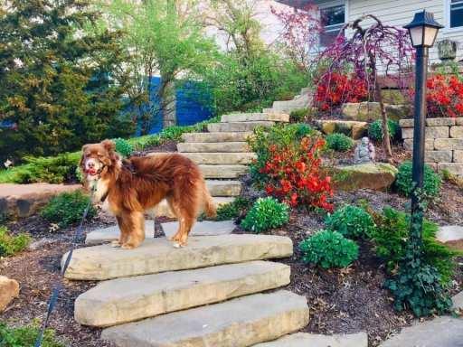 Cat dog landscaping